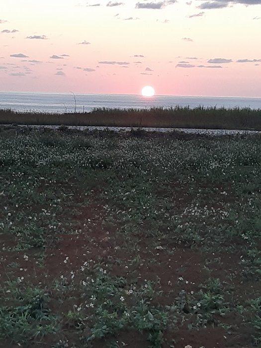 観光・レジャーで満喫 長間浜近くの農道